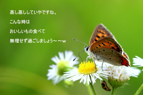 Img_1883012